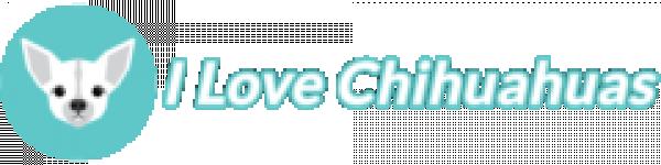 avis LOVE CHIHUAHUA